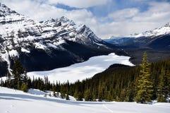 Lago congelato Peyto, sosta nazionale del Banff, Canada Fotografie Stock