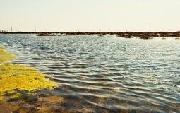 Lago contaminado fotografia de stock