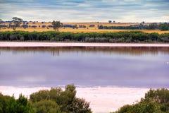 Lago cor-de-rosa, Austrália Ocidental Imagem de Stock