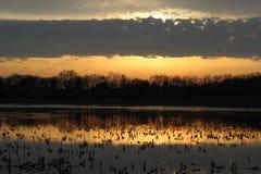 Lago cornfield Imagen de archivo libre de regalías
