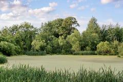 Lago country Foto de Stock