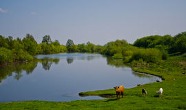 Lago countryside Imagen de archivo libre de regalías