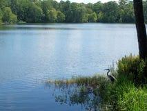 Lago creek della montagna Immagine Stock