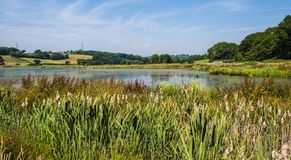Lago Crowhurst, ao noroeste de Hastings, Sussex do leste, Inglaterra fotografia de stock royalty free