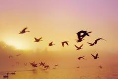 Lago D sunrise Imagen de archivo libre de regalías