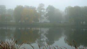 Lago da manhã da floresta da névoa filme