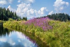 Lago da montanha de Hintersteinersee Fotografia de Stock Royalty Free
