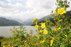 Lago da montanha de Tian Shan Imagem de Stock