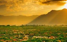 Lago Dal, Cachemira, la India fotografía de archivo