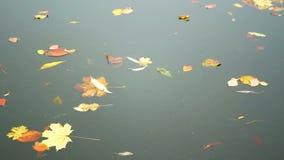 Lago das folhas das árvores do outono video estoque