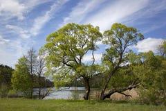 Lago das madeiras Imagens de Stock