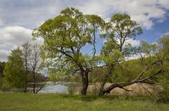 Lago das madeiras Foto de Stock Royalty Free