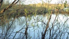 Lago das madeiras no por do sol filme