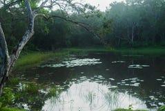 Lago Dawn Water Lily National Park Wilpattu fotografía de archivo libre de regalías