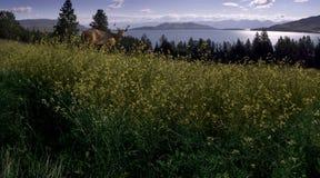 Lago de cabeza llana Foto de archivo libre de regalías
