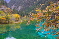 Lago de cinco flores, Jiuzhaigou Fotografia de Stock