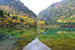 Lago de cinco flores, Jiuzhaigou Imagens de Stock Royalty Free