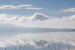 Lago de flamencos Imagen de archivo libre de regalías