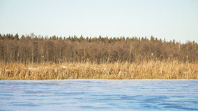 Lago de la charca del paisaje del otoño Foto de archivo libre de regalías