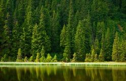 Lago de la montaña del pino Fotos de archivo libres de regalías