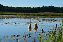Lago de la turba del bosque foto de archivo libre de regalías