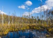 Lago de las maderas Imágenes de archivo libres de regalías
