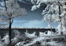 Lago de los pinos Fotografía de archivo libre de regalías