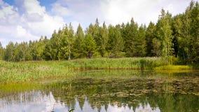 Lago de madera Fotos de archivo libres de regalías