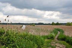 Lago de madera de la caña de la trayectoria, het Vinne, Zoutleeuw, Bélgica Imágenes de archivo libres de regalías