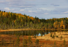 Lago de madera. paisaje del otoño. naturaleza. Carelia Fotografía de archivo