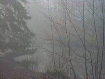 Lago de negligência da floresta da floresta nevoenta fotografia de stock