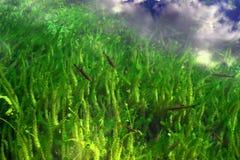 Lago de Riflessi su Foto de archivo libre de regalías