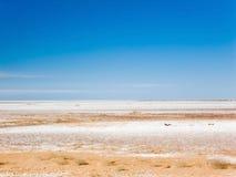 Lago de sal seco Fotografia de Stock Royalty Free