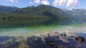 Lago de surpresa Bohinj na manhã Dois patos estão nadando na água clara profunda com peixes Paisagem lindo de Julian Alps sloveni filme