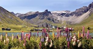 Lago de Tignes e de flores em França Fotografia de Stock
