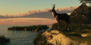 Lago deer Fotografia Stock