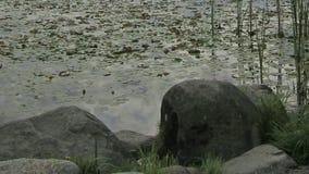 Lago deer in Burnaby BC Canada con la riflessione commovente Timelapse delle nuvole e dell'acqua di vista dell'orizzonte della cit video d archivio