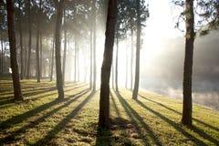 Lago degli alberi della natura Immagine Stock Libera da Diritti