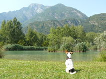 Lago dei Tre Comuni and Jack Russell Terrier. Sunny day in Italian mountain Stock Photos