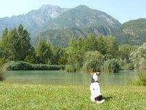 Lago-dei Tre Comuni und Jack Russel Terier Stockfotos