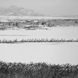 Lago del cigno di Rongcheng Immagine Stock Libera da Diritti