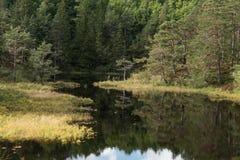 Lago del fiume della foresta fotografia stock libera da diritti