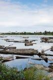 lago del floodwood Fotografía de archivo