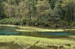 Lago del hai del cisne, valle del jiuzhai, China Foto de archivo