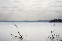 Lago del helada del invierno con los troncos y el cielo nublado foto de archivo libre de regalías