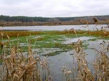Lago del humedal del bosque Imágenes de archivo libres de regalías