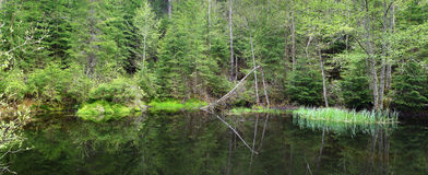 Lago del letame della palude in sosta nazionale fotografie stock