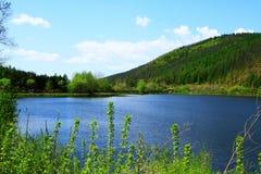 Lago del pato de mandarín Imagen de archivo libre de regalías