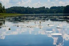 lago del verano con los lillies del agua en día caliente foto de archivo