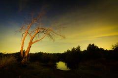 Lago dell'albero di notte Fotografia Stock